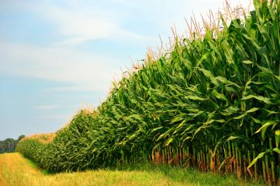 How much do you know about ethanol?